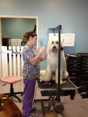 Dog grooming Overland Park Kansas