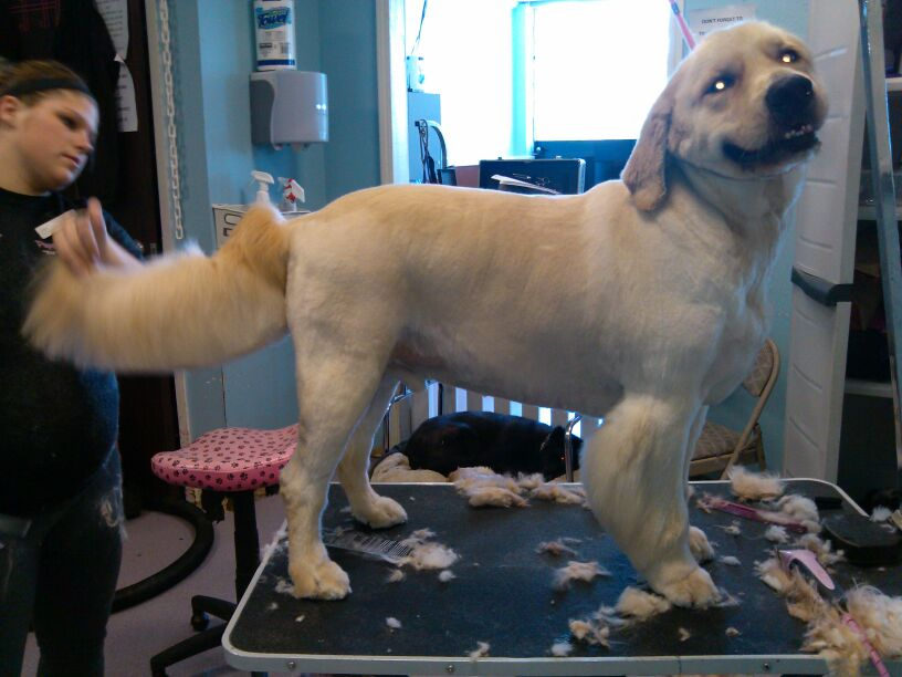 Dog grooming and boarding at Leawood local Puppys Playpen