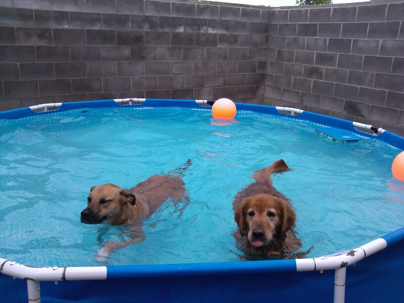 Swimming doggies at daycare and dog boarding at Overland Park